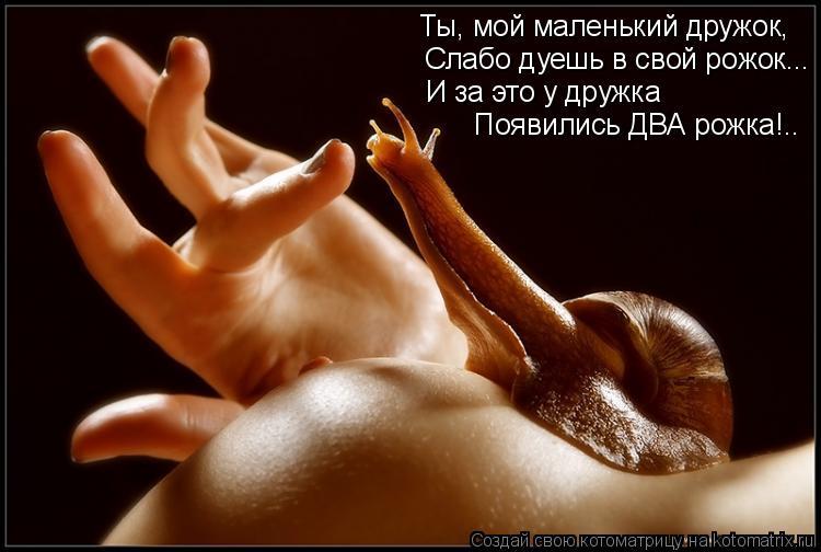 Котоматрица: Ты, мой маленький дружок, Слабо дуешь в свой рожок... И за это у дружка Появились ДВА рожка!..