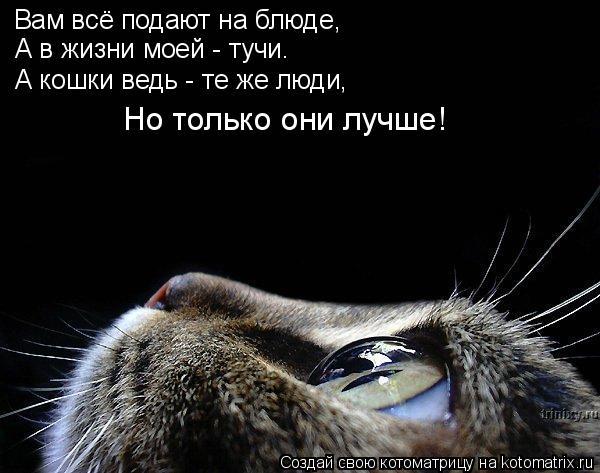 Котоматрица: Вам всё подают на блюде, А в жизни моей - тучи. А кошки ведь - те же люди, Но только они лучше!