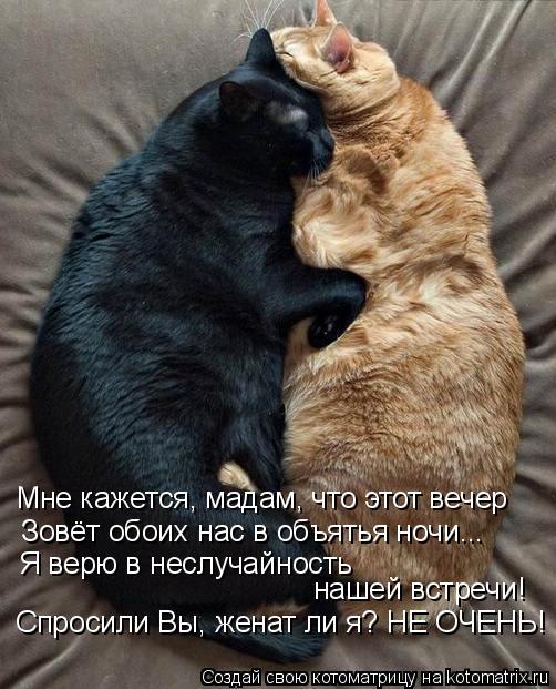 Котоматрица: Мне кажется, мадам, что этот вечер Зовёт обоих нас в объятья ночи... Я верю в неслучайность нашей встречи! Спросили Вы, женат ли я? НЕ ОЧЕНЬ!