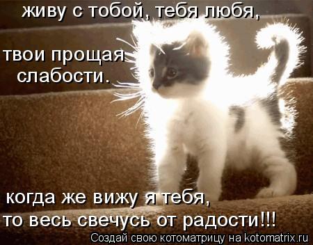 Котоматрица: живу с тобой, тебя любя, твои прощая слабости. когда же вижу я тебя, то весь свечусь от радости!!!