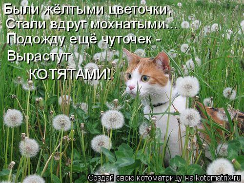 Котоматрица: Были жёлтыми цветочки, Стали вдруг мохнатыми... Подожду ещё чуточек - Вырастут КОТЯТАМИ!