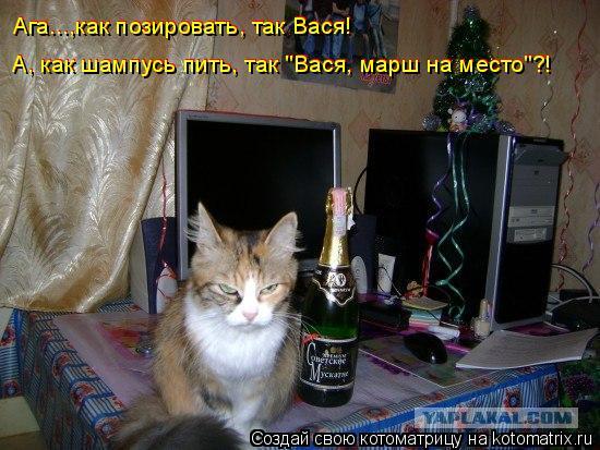 """Котоматрица: Ага...,как позировать, так Вася! Ага...,как позировать, так Вася! А, как шампусь пить, так """"Вася, марш на место""""?! А, как шампусь пить, так """"Вася, мар"""