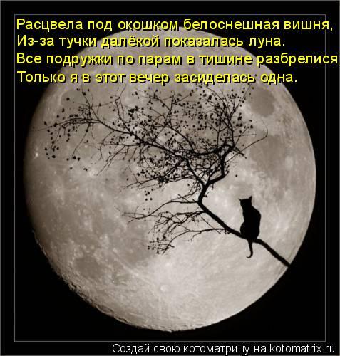 Котоматрица: Расцвела под окошком белоснешная вишня, Из-за тучки далёкой показалась луна. Все подружки по парам в тишине разбрелися, Только я в этот вече