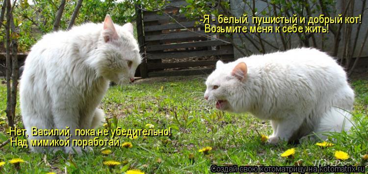 Котоматрица: -Я - белый, пушистый и добрый кот! Возьмите меня к себе жить! -Нет, Василий, пока не убедительно! Над мимикой поработай.