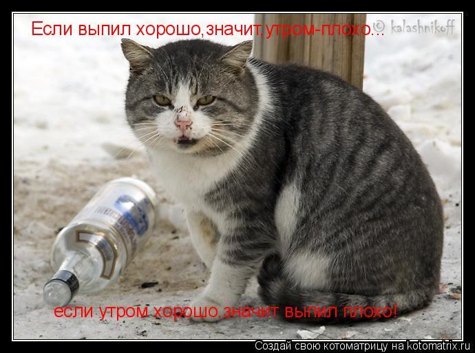 Котоматрица: Если выпил хорошо,значит,утром-плохо... если утром хорошо,значит выпил плохо!