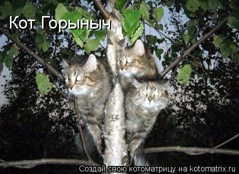 Котоматрица: Кот Горыныч