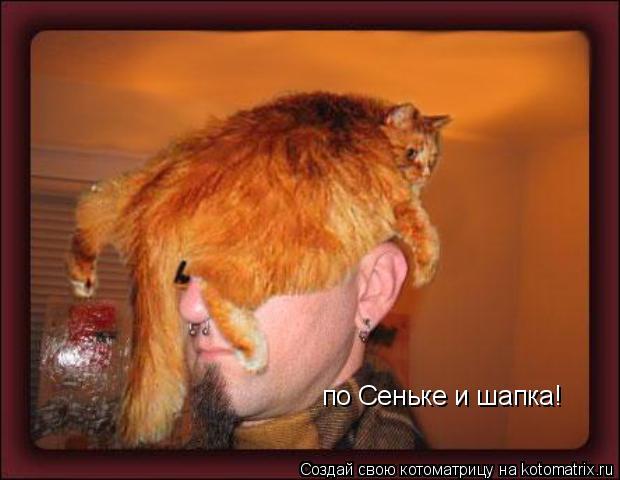 Котоматрица: по Сеньке и шапка!