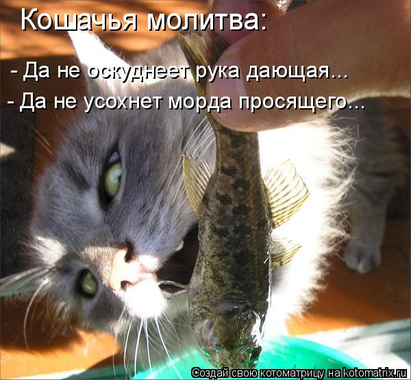Котоматрица: Кошачья молитва: - Да не оскуднеет рука дающая... - Да не усохнет морда просящего...