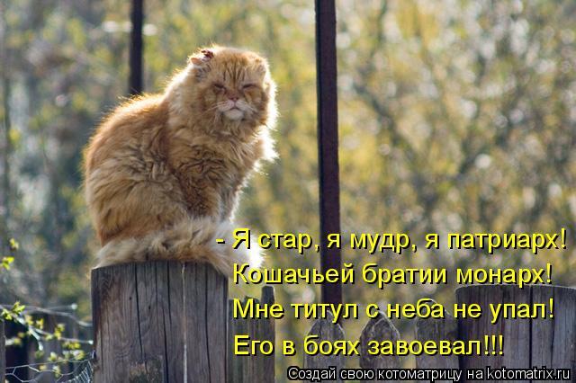 Котоматрица: - Я стар, я мудр, я патриарх! Кошачьей братии монарх! Мне титул с неба не упал! Его в боях завоевал!!!