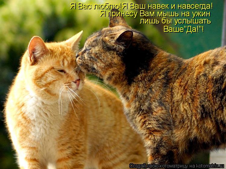 """Котоматрица: Я Вас люблю!Я Ваш навек и навсегда! Я принесу Вам мышь на ужин лишь бы услышать Ваше""""Да!""""!"""