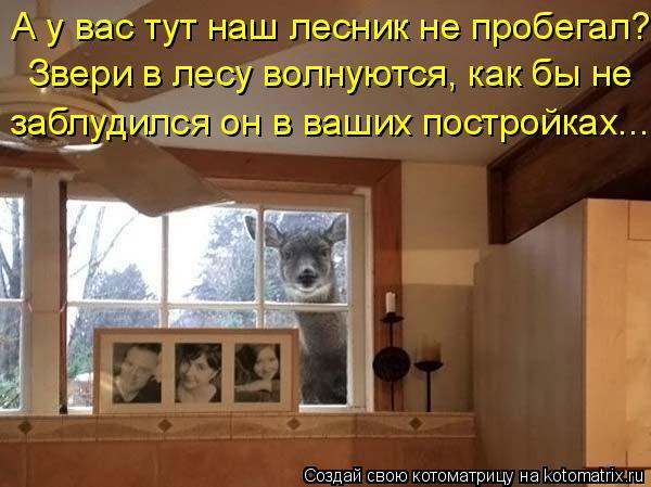 Котоматрица: А у вас тут наш лесник не пробегал? Звери в лесу волнуются, как бы не  заблудился он в ваших постройках...