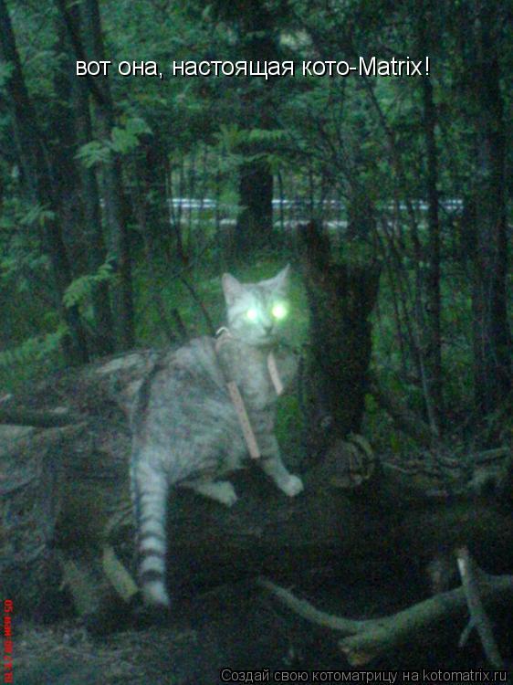 Котоматрица: вот она, настоящая кото-Matrix!