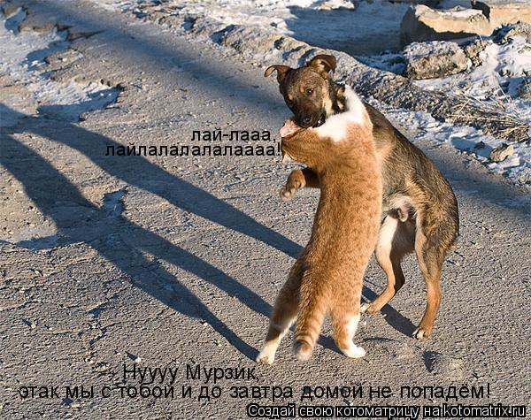 Котоматрица: Нуууу Мурзик,  этак мы с тобой и до завтра домой не попадём! лай-лааа,  лайлалалалалаааа!