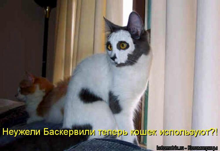 Котоматрица: Неужели Баскервили теперь кошек используют?!