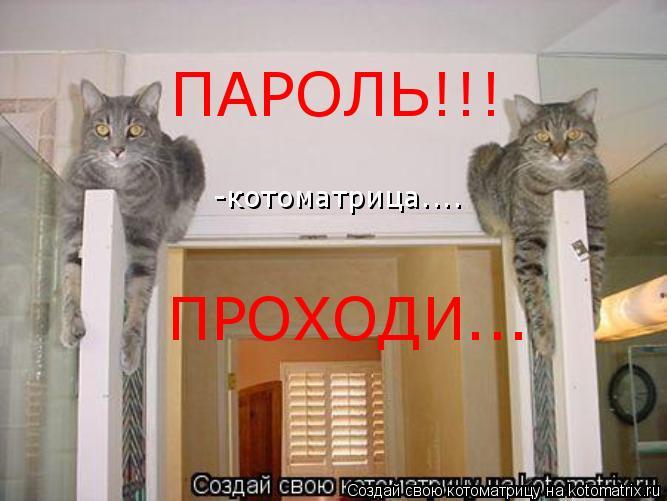 Котоматрица: ПАРОЛЬ!!! ПРОХОДИ... -котоматрица....