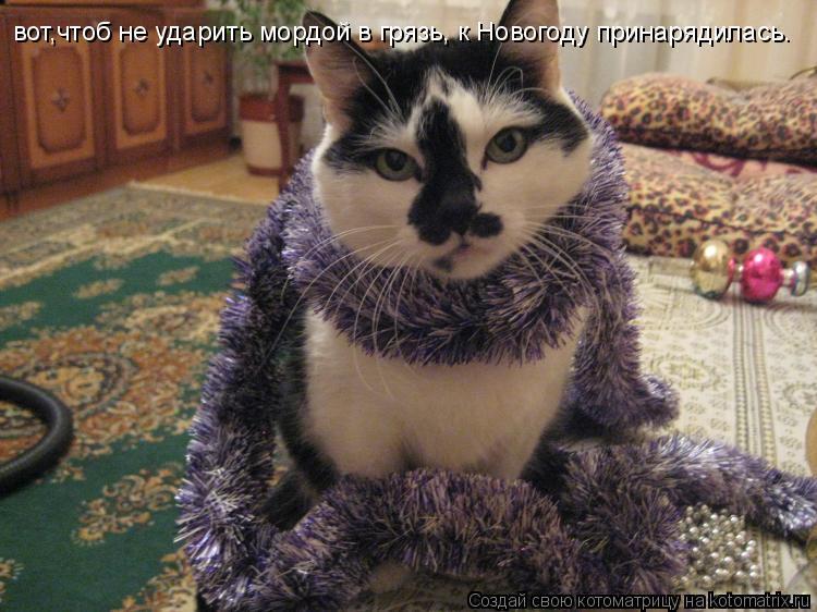 Котоматрица: вот,чтоб не ударить мордой в грязь, к Новогоду принарядилась.
