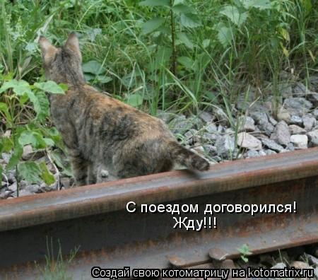 Котоматрица: С поездом договорился! Жду!!!