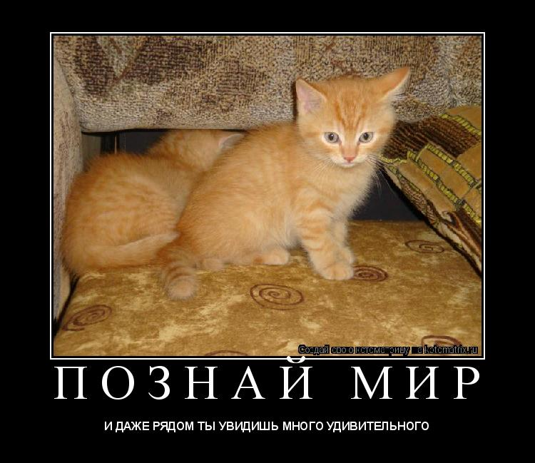 Котоматрица: П О З Н А Й   М И Р