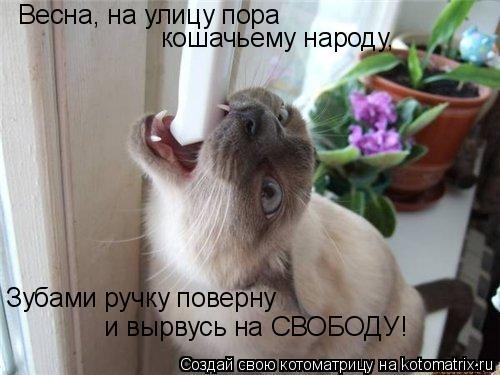 Котоматрица: Весна, на улицу пора  кошачьему народу, Зубами ручку поверну  и вырвусь на СВОБОДУ!