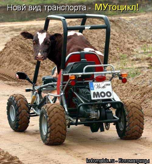 Котоматрица: Новй вид транспорта - МУтоцикл!