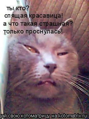 Котоматрица: ты кто? спящая красавица! а что такая страшная? только проснулась!