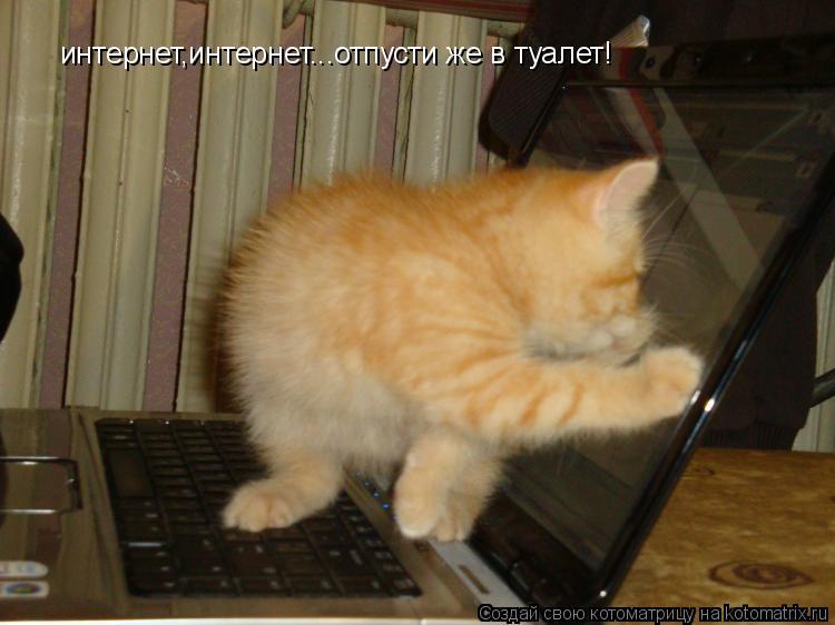 Котоматрица: интернет,интернет...отпусти же в туалет!