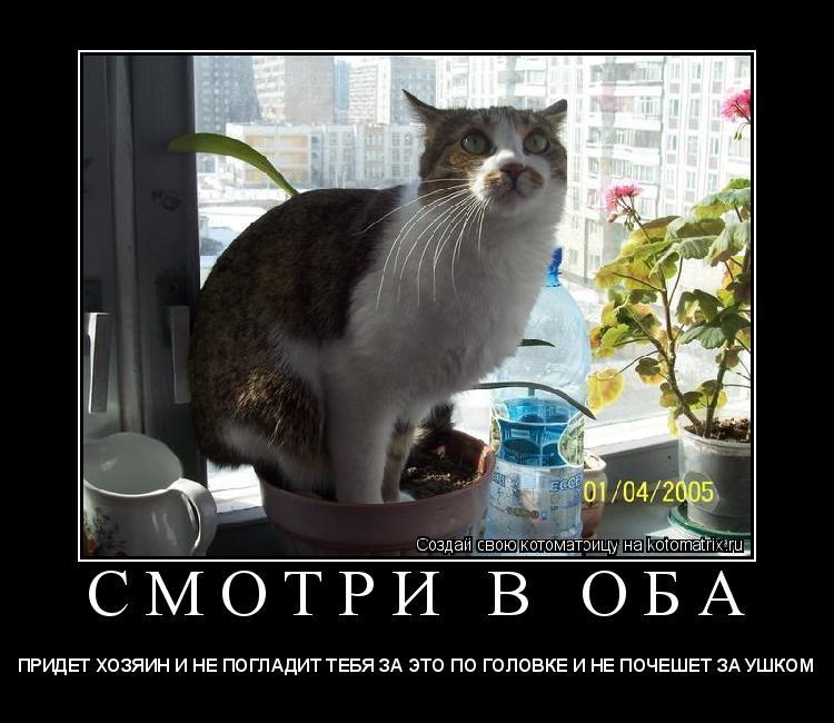 Котоматрица: С М О Т Р И   В   О Б А