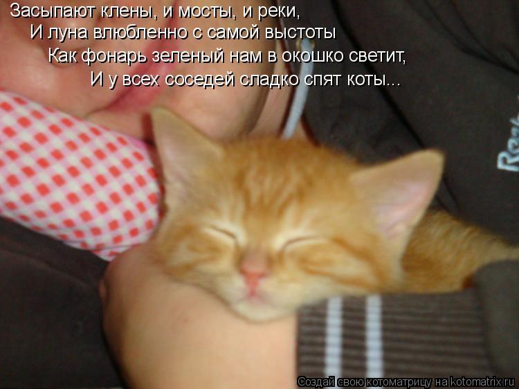 Котоматрица: Засыпают клены, и мосты, и реки, И луна влюбленно с самой выстоты Как фонарь зеленый нам в окошко светит, И у всех соседей сладко спят коты...