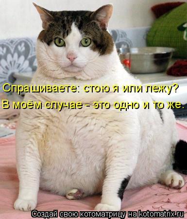 Котоматрица: Спрашиваете: стою я или лежу? В моём случае - это одно и то же.
