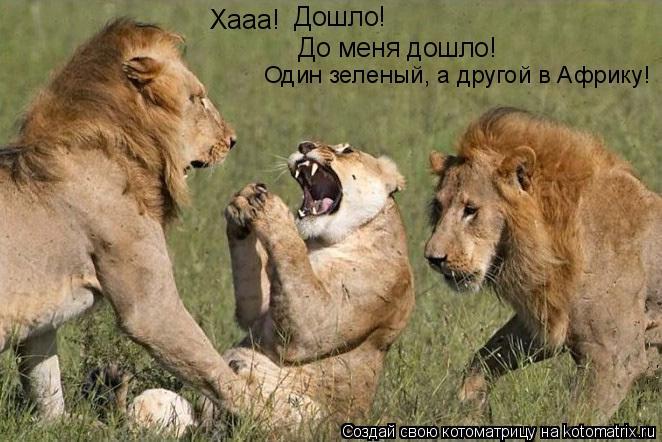 Котоматрица: Хааа! Дошло! До меня дошло! Один зеленый, а другой в Африку!