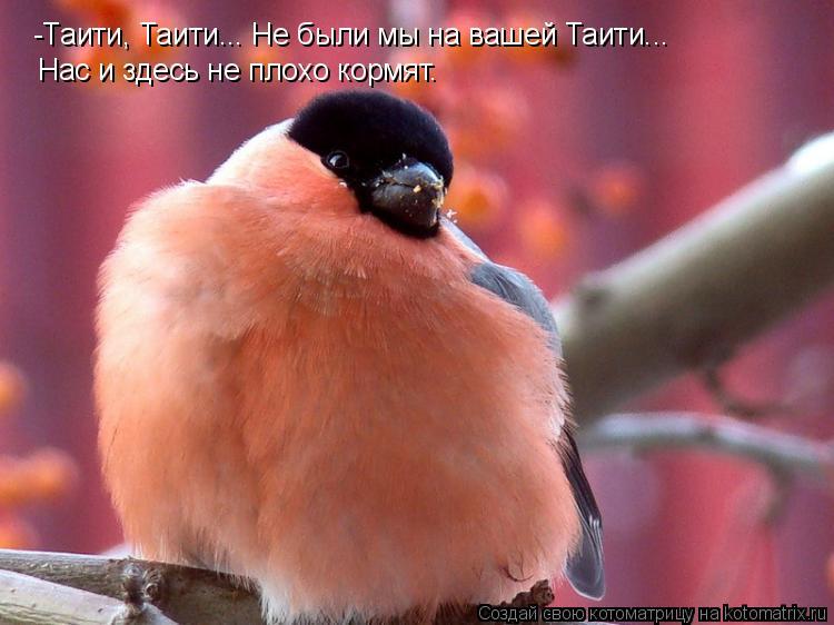 Котоматрица: -Таити, Таити... Не были мы на вашей Таити... Нас и здесь не плохо кормят.