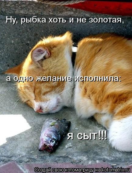 Котоматрица: Ну, рыбка хоть и не золотая, а одно желание исполнила: я сыт!!!