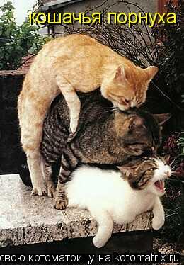 Кошачья порнуха