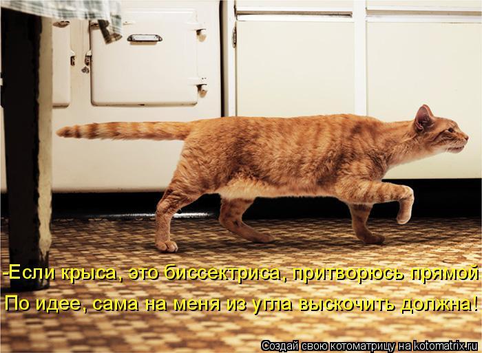 Котоматрица: -Если крыса, это биссектриса, притворюсь прямой. По идее, сама на меня из угла выскочить должна!