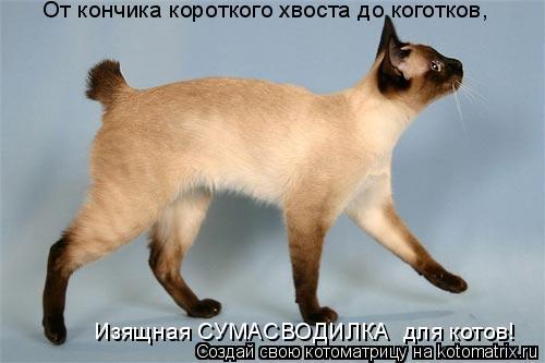 Котоматрица: От кончика короткого хвоста до коготков, Изящная СУМАСВОДИЛКА  для котов!