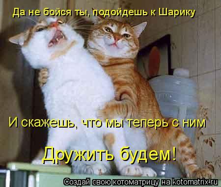 Котоматрица: Да не бойся ты, подойдешь к Шарику И скажешь, что мы теперь с ним Дружить будем!