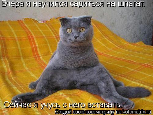 Котоматрица: Вчера я научился садиться на шпагат.   Сейчас я учусь с него вставать.