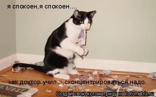 Котоматрица: я спокоен,я спокоен.... как доктор учил....сконцентрироваться надо.