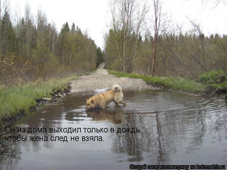 Котоматрица: Он из дома выходил только в дождь,  чтобы жена след не взяла.