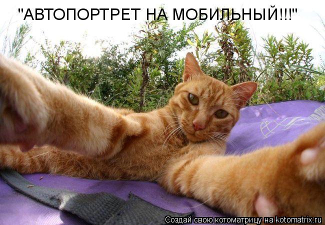 """Котоматрица: """"АВТОПОРТРЕТ НА МОБИЛЬНЫЙ!!!"""""""