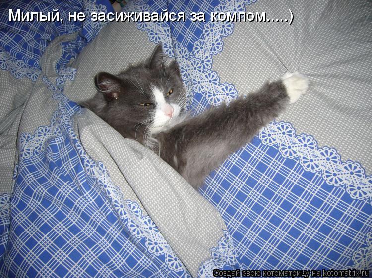 Как сделать чтобы кошка была спокойной