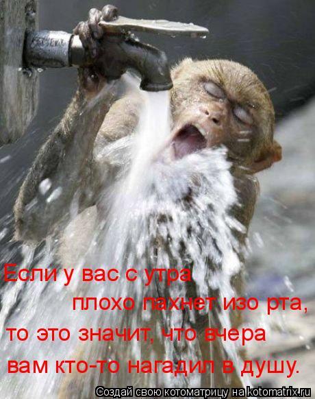 Котоматрица: Если у вас с утра  плохо пахнет изо рта, то это значит, что вчера вам кто-то нагадил в душу.