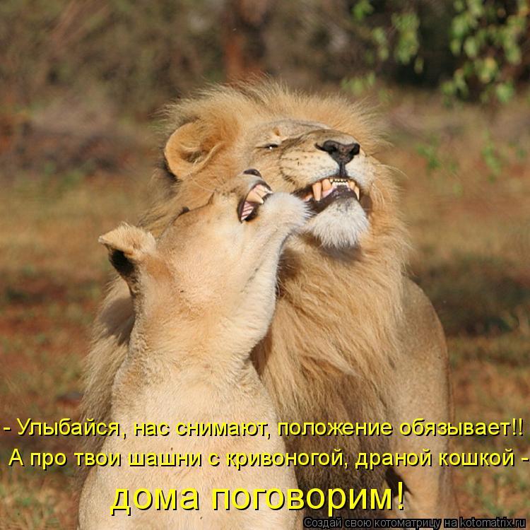 Котоматрица: - Улыбайся, нас снимают, положение обязывает!! А про твои шашни с кривоногой, драной кошкой - дома поговорим!