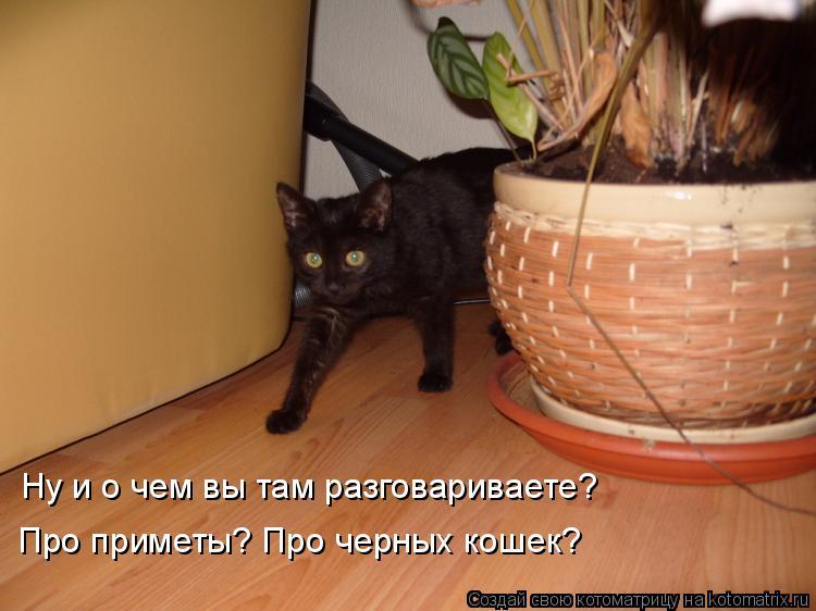 Котоматрица: Ну и о чем вы там разговариваете?  Про приметы? Про черных кошек?
