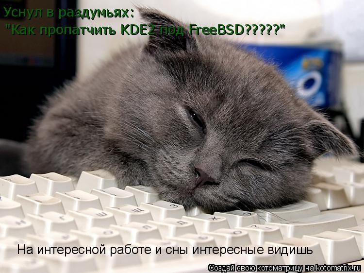"""Котоматрица: Уснул в раздумьях: """"Как пропатчить KDE2 под FreeBSD?????"""""""