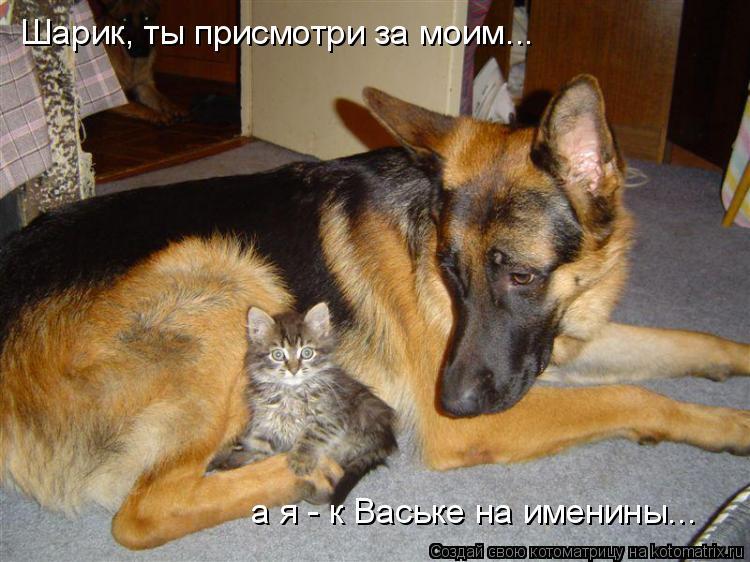 Котоматрица: Шарик, ты присмотри за моим... а я - к Ваське на именины...