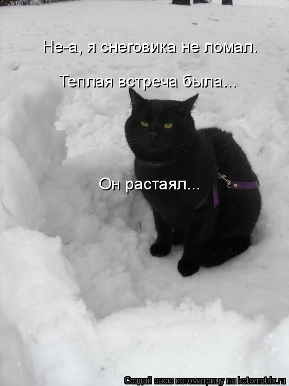 Котоматрица: Не-а, я снеговика не ломал. Он растаял... Теплая встреча была...