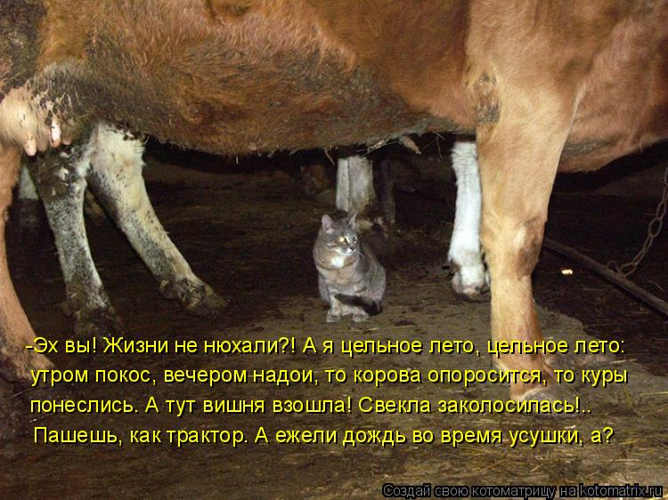 Котоматрица: -Эх вы! Жизни не нюхали?! А я цельное лето, цельное лето:  утром покос, вечером надои, то корова опоросится, то куры понеслись… А тут вишня взош
