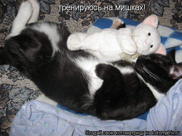 Котоматрица: тренируюсь на мишках!