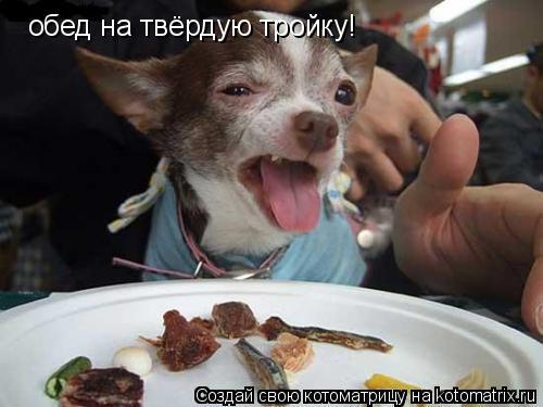 Котоматрица: обед на твёрдую тройку!